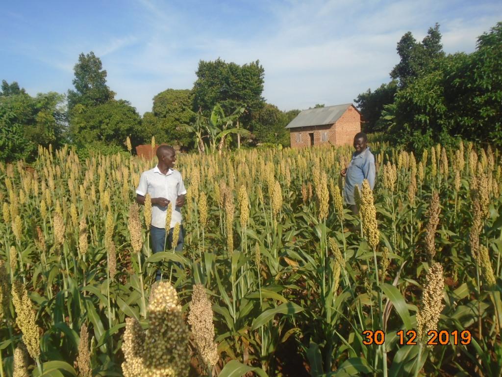 visiting our sorghum farmers