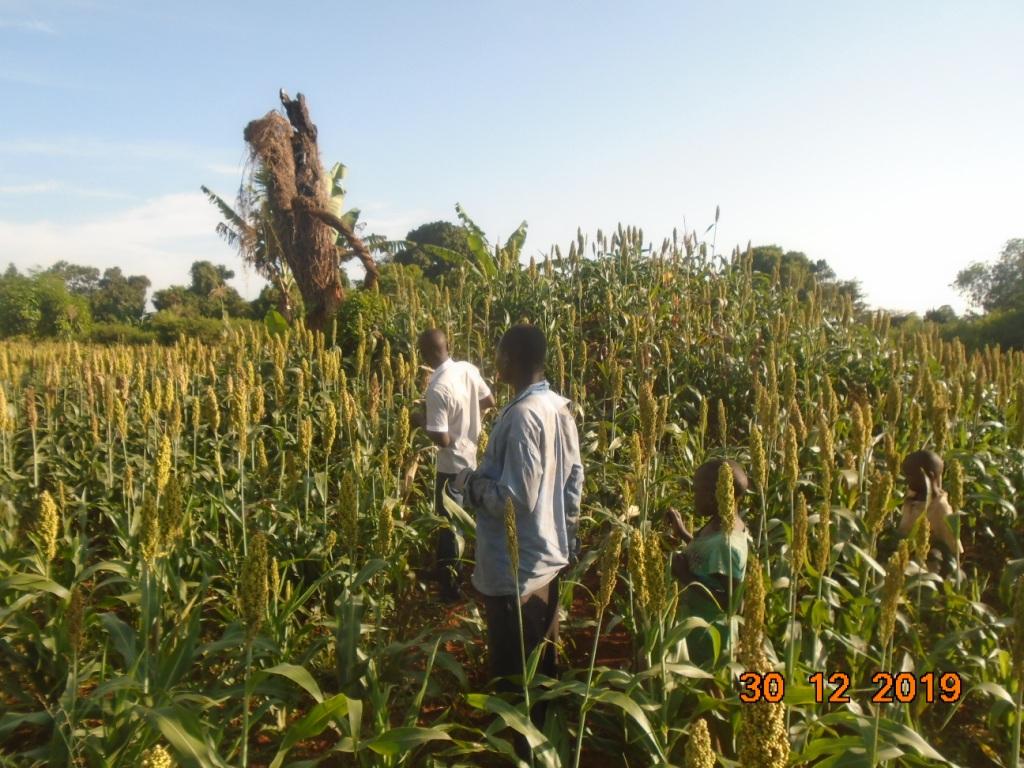 visiting our sorghum farmers