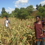 One of our farmers takes us around her sorghum farm