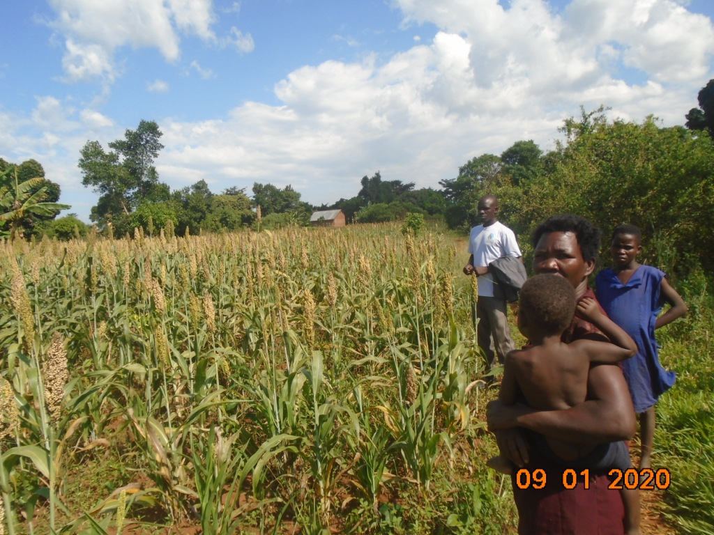 Her sorghum will soon be ready