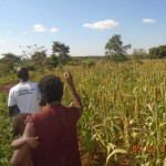 A farmer takes us around her sorghum farm