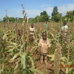 Harvesting in this field begins soon